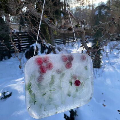 Ledusskulptūru iesūtītāja - Dace Jurcēna