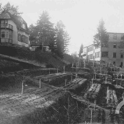 """Kazaku kalns. Terasveida dārzs ar ābelēm netālu no sanat. """"Saulstari"""". 20. gs. 30. gadi"""